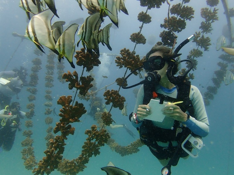 Trainee Ester Lambert checking out the coral nurseries