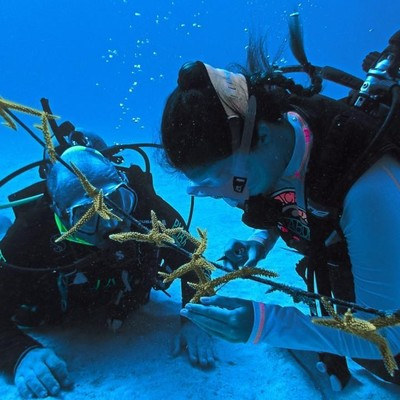 CORAL REEF RESTORATION TRAINING