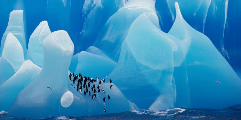 Penguins & Icebergs in Antarctica