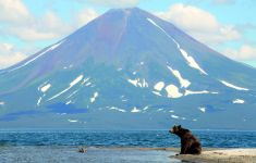 Brown bear, Kronotsky Volcano, Kamchatka