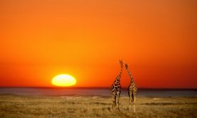 South Africa & Namibia by Luxury Train