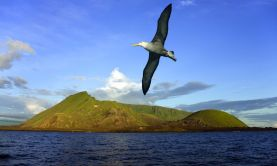 Glories of the Galapagos