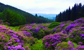Britain and Ireland in Bloom