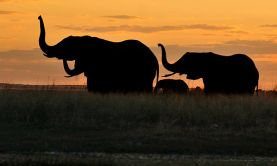 Wonders & Wildlife of Africa