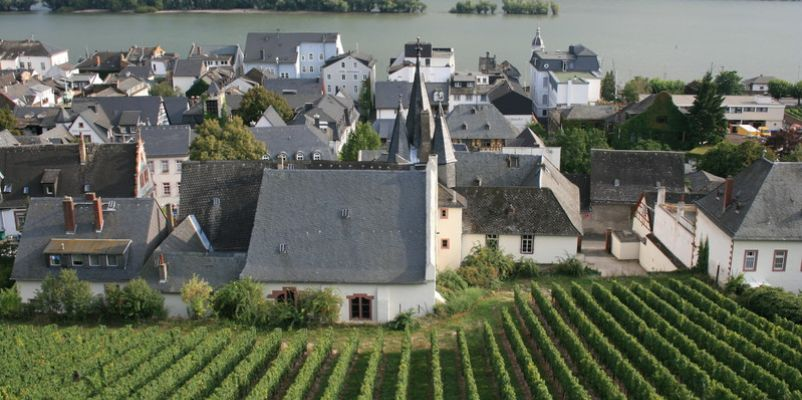 Vineyards of Rudesheim