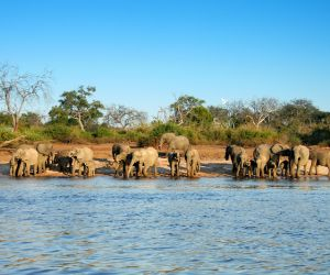 Elephants at a waterhole, Hwange National Park
