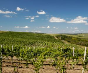 Vineyards of Cricova