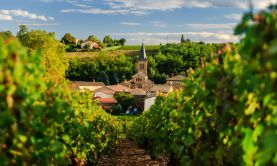 Rivers & Vines of Southern France