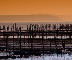 Oyster beds at sunset, Arcachon Basin