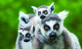 Marvels of Madagascar