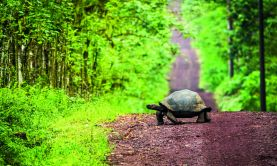 Natural Wonders of the Amazon & Galapagos
