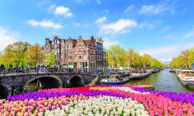 Spring Flowers & the Golden Age of Dutch Art