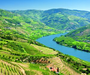 Vineyards of Douro Valley