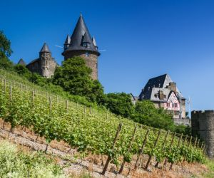 Vineyards of Bacharach and Stahleck Castle