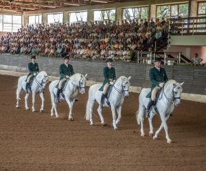 Lipizzaner performing horses at Lipica Stud Farm