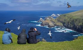 Birds of the Scottish Isles