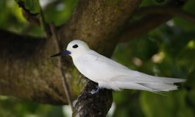 Passage through the Seychelles