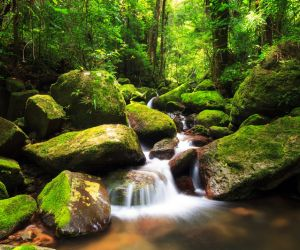 Masoala National Park